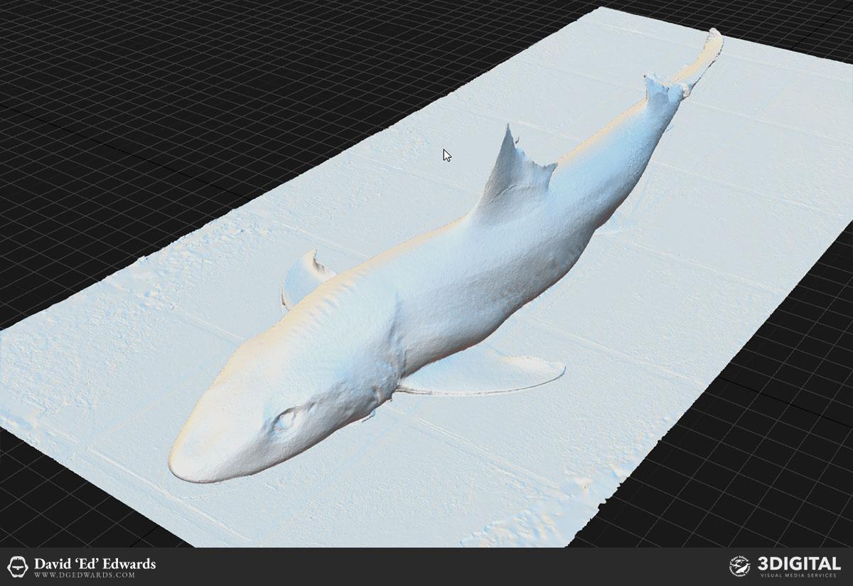 Smooth hound shark photogrammetry