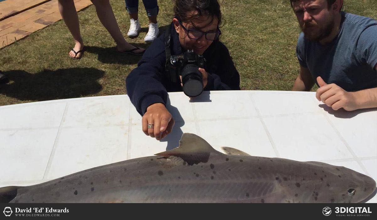 Training students in shark photogrammetry