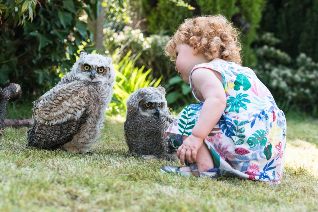 Ginger child sat next to a pair of great horned owls in the garden, summer time