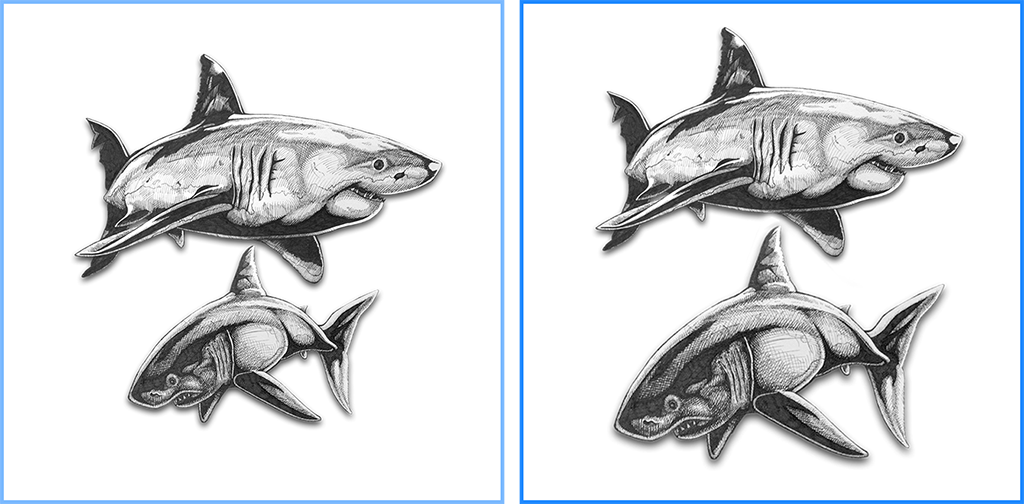 Comparison between shark drawings