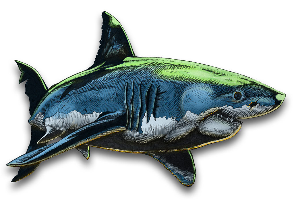 Shark one colouring
