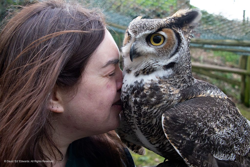 Anna Phillips and a Great Horned Owl