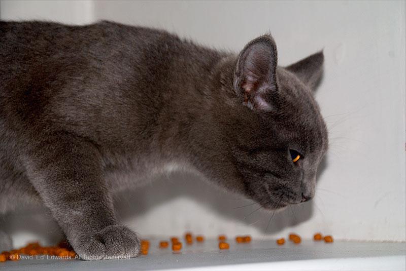 A cat in Siberia